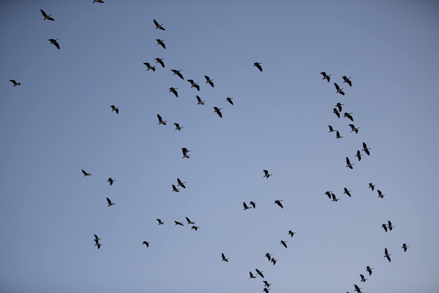 birds flying in the sky - professional wedding photography